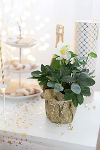 100% Mosel Tischläufer Metallic, in Gold (30 cm x 10 m), Tischband aus Polyester Vliesstoff, edle Tischdeko für Weihnachten & Hochzeiten, festliche Dekoration zu besonderen Anlässen - 3