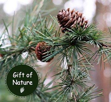 Anstore 30 Tannenzapfen KIeferzapfen Schwarzkiefern Zapfen Kiefernzapfen Tanne Naturzapfen Weihnachtsdeko Adventsdeko Pine Cones, 4-6 cm - 4