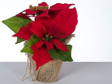 Bambelaa! 3 StückWeihnachtsstern künstlich Fenster naturgetreu Weihnachten Dekoration Weihnachtsdeko (Rot) - 4
