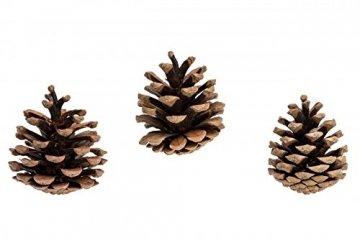 NaDeco Tannenzapfen ca. 5-6cm 1kg Pinus nigra Schwarzkiefern Zapfen Kiefernzapfen Tannen Zapfen Naturzapfen Weihnachtsdeko Adventsdeko - 3